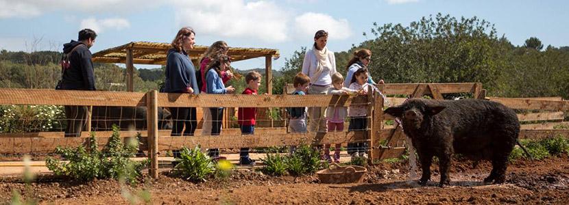 boerderij op Ibiza met kinderen